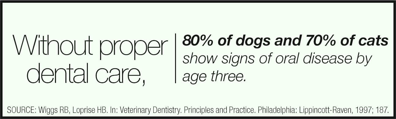 Without proper dental care 80% of dogs and 70% of cats will show signs of oral disease by age 3