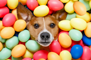 Dog in easter eggs