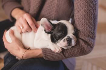french bulldog puppy in someones arms